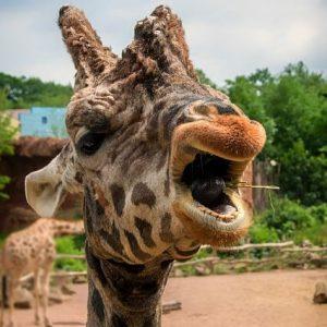 Hannoveranischer Zoo